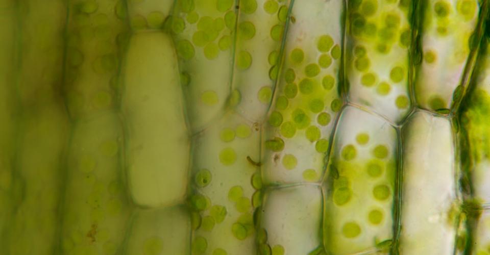 leco_slider_metabolomics_plants
