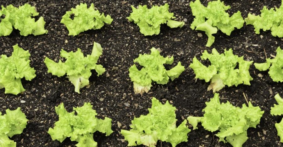 Ausgewogener Boden: Kohlenstoff-, Stickstoff- und Schwefelbestimmung mit dem CNS928