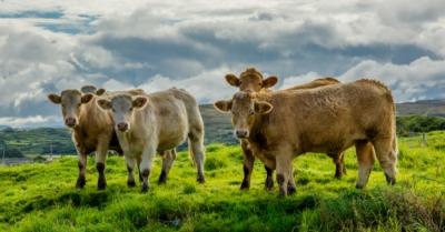 Kostengünstige Primärfeuchtigkeits-Analyse für Milchprodukte