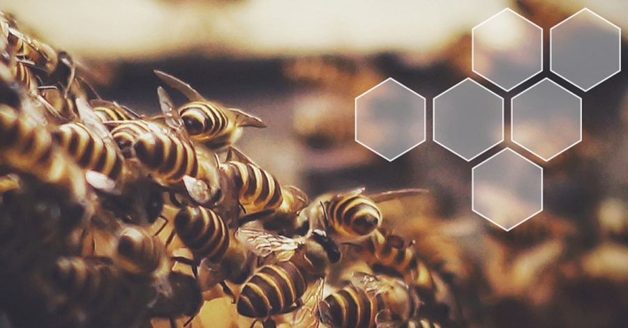 «La détection des maladies des abeilles mellifères grâce à la surveillance des changements dans les profils volatils» par Maggie Gill - Keele University, Royaume-Uni