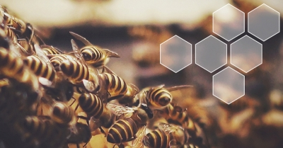 """""""The detection of honey bee diseases through monitoring shifts in volatile profiles"""" by Maggie Gill – Keele University, UK"""