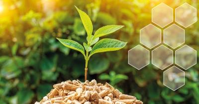 Analyses de thermogravimétriques de la Biomasse